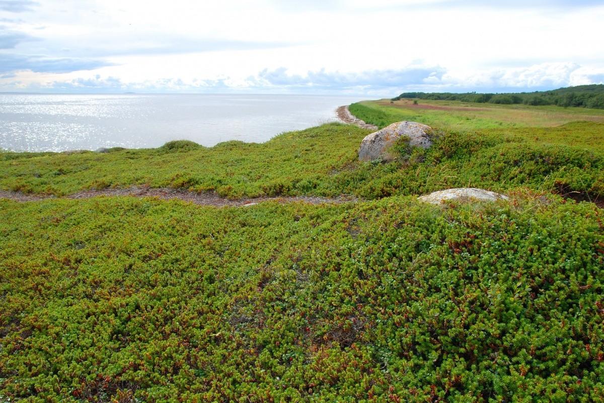 Соловецкие острова мыс Печак