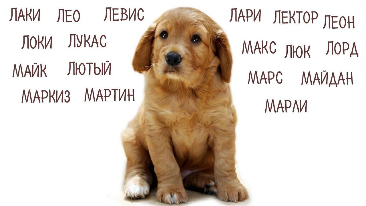 Как назвать большую собаку мальчика