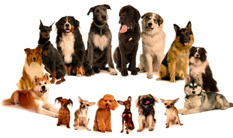 Как придумать кличку собаке маленькой, большой. Как назвать собаку мальчика. Как назвать собаку девочку.