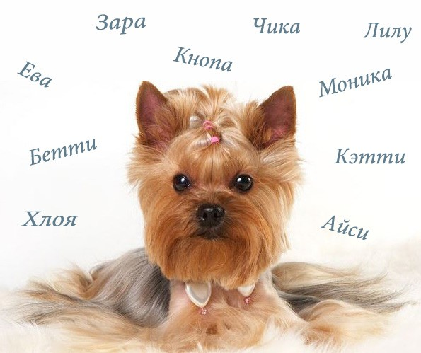 Как назвать собаку девочку маленькой породы