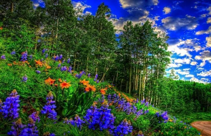 Характеристики однодольных и двудольных растений. Признаки, сходство, различия, таблица двудольных и однодольных растений.