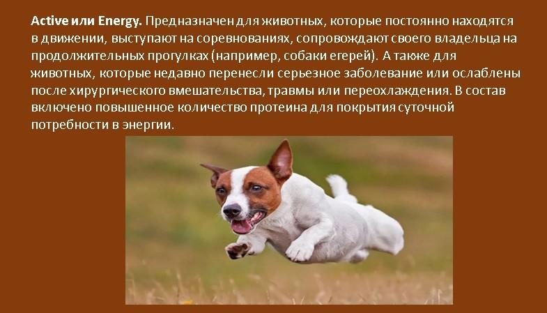 Сухой корм для собак какой выбрать