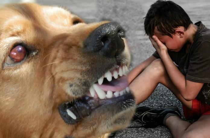 Бешенство укусила собака. Первая помощь при укусе собаки. Признаки бешенства. Уколы от бешенства.