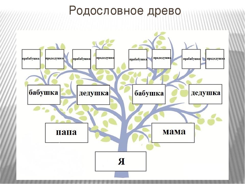 Как составить родословную семьи образец