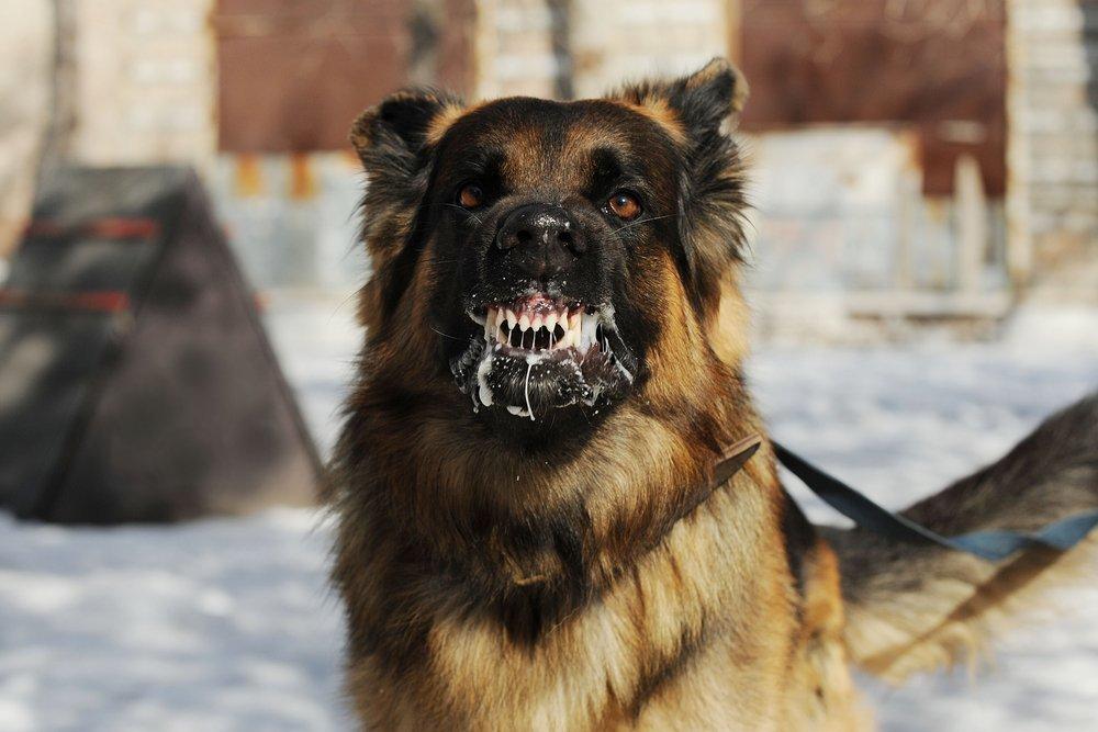 Бешенство у собак признаки и проявления