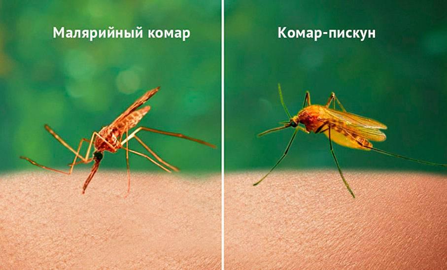 Что делать если укусил малярийный комар