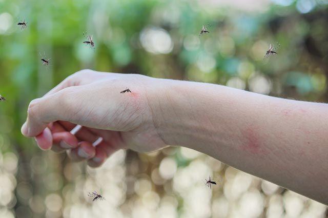 Что делать если укусил комар