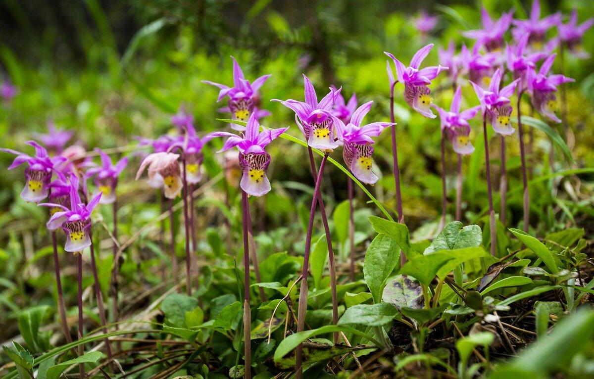 Орхидеи в лесу