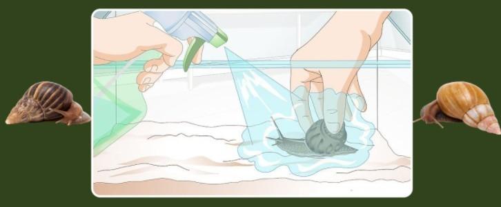 как чистить террариум
