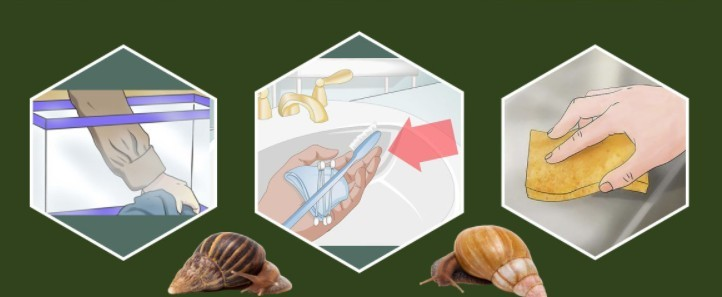 Улитка ахатин как содержать в домашних условиях. Полезные свойства улитки ахатин.