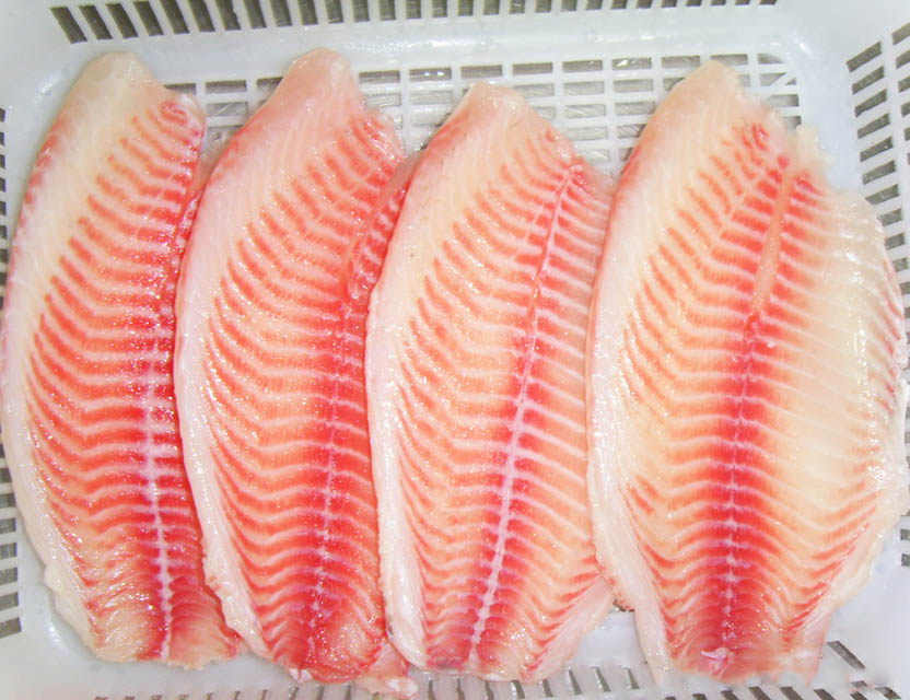Рыба тилапия польза